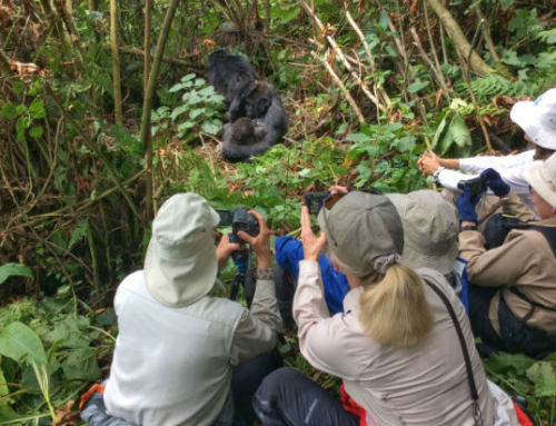 CBC Homestretch Brian Keating on Gorillas in Rwanda