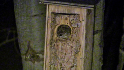 Flying Squirrels | picture of flying squirrels in Calgary