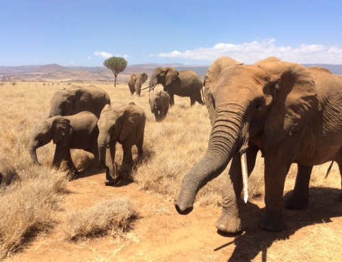 CBC Homestretch: Moving Elephants in Malawi