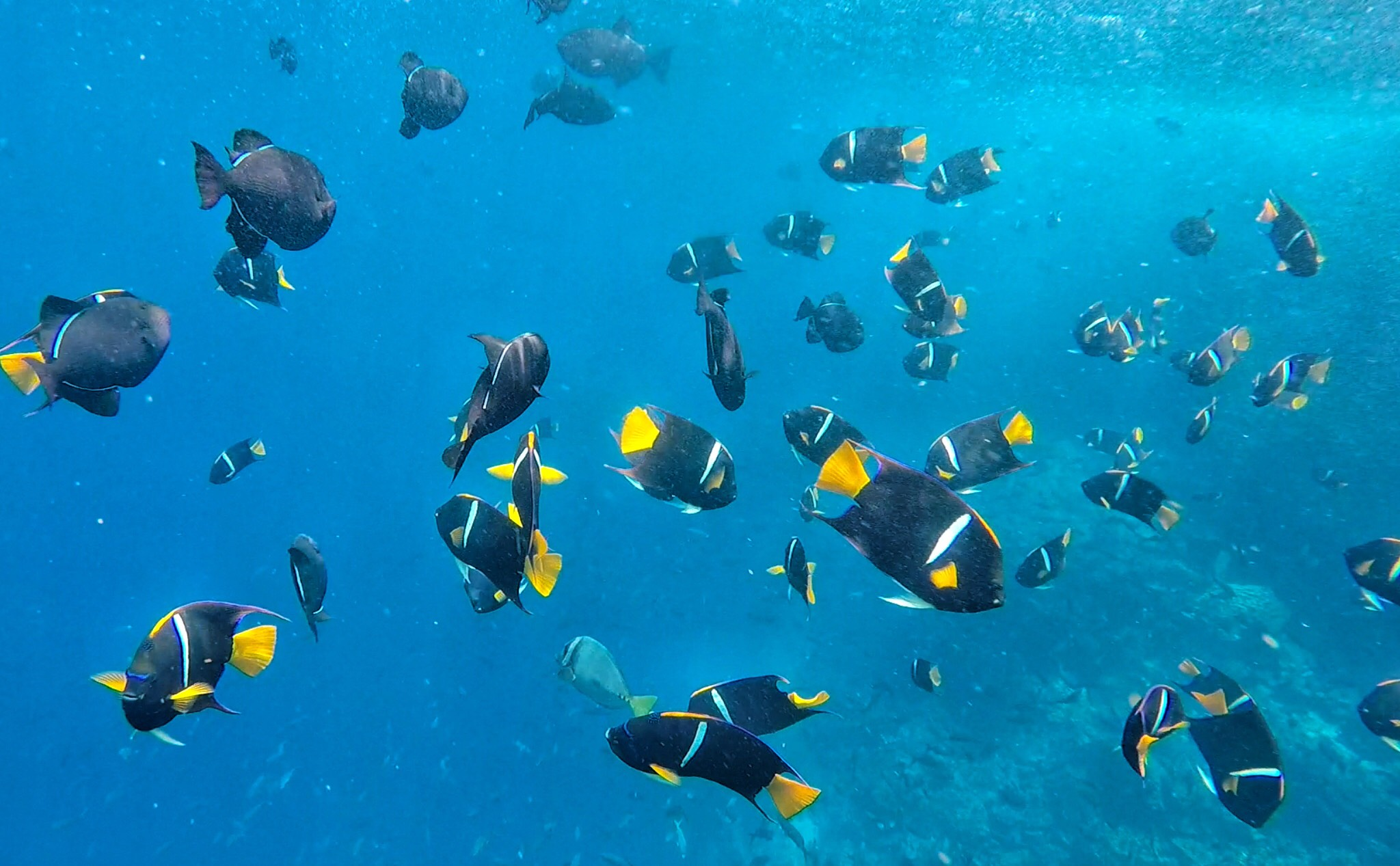 Galapagos | picture of school of fish