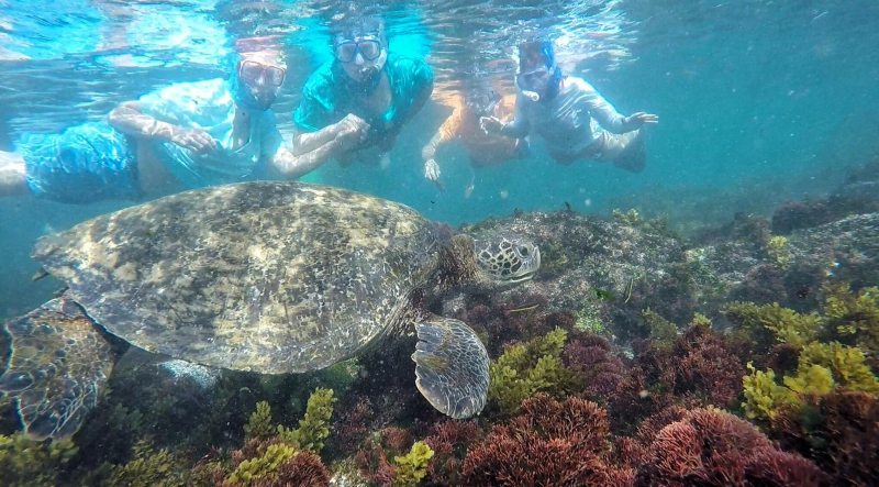 Galapagos | picture of scuba divers