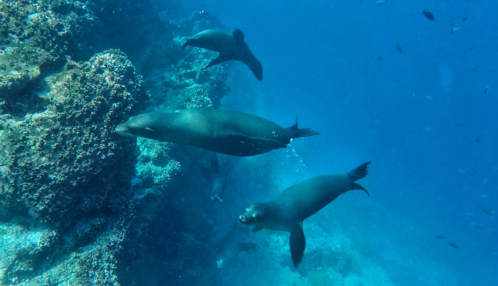 Galapagos | picture of sea lions
