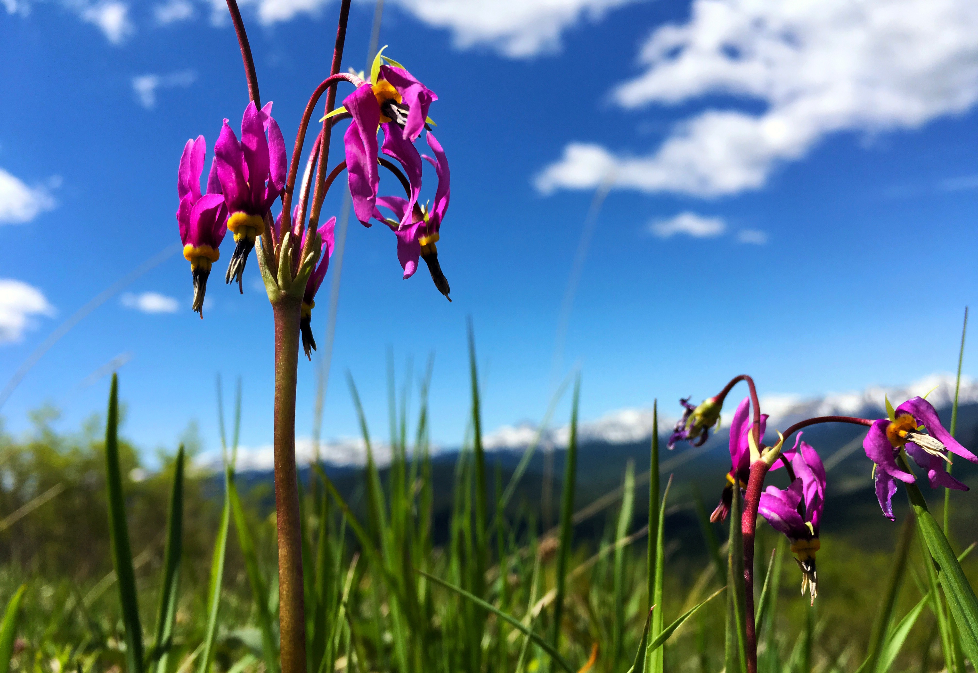 Brian Keating | Spring Flowers 2