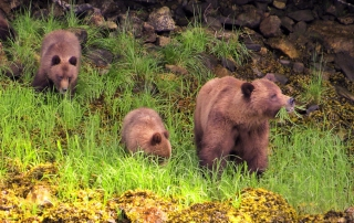 Brian Keating | Grizzly Bears 1
