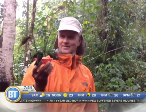 Breakfast Television Calgary: Birds in the Cloud Forest of Ecuador