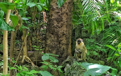 Barbados|picture of Brian Keating with West African Green monkey