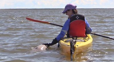 Beluga|Young Woman Petting Beluga
