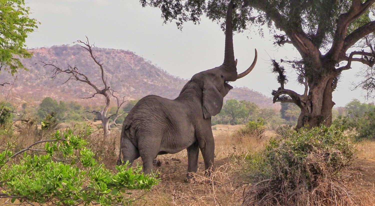 Lake Kariba | elephant playing in the trees