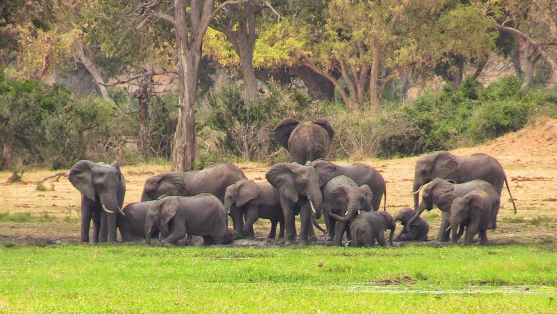 Lake Kariba | herd of elephants from afar