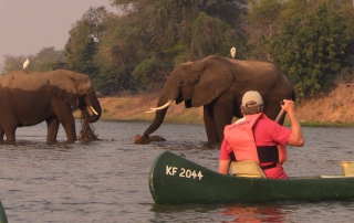 Zimbabwe| Brian Keating with Elephants in Zimbabwe