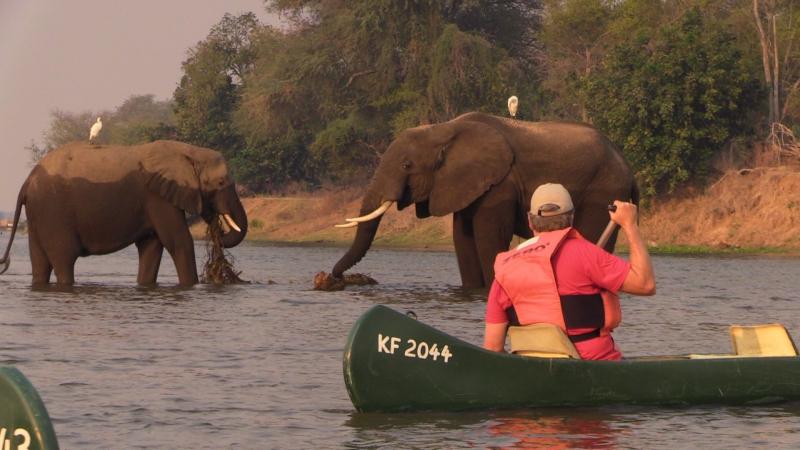 Zimbabwe| Brian Keating with Elephants in Zimbabwe