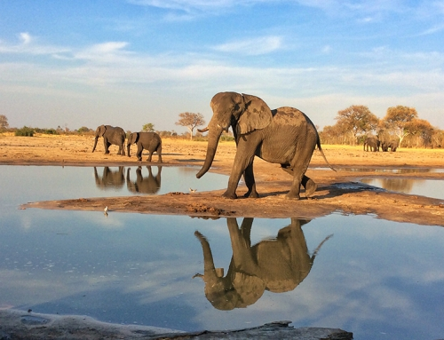 CBC Homestretch: Elephants in Africa