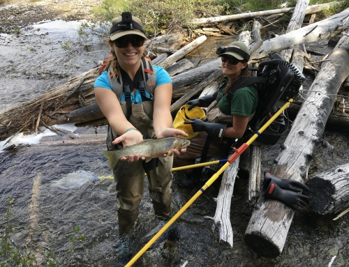 CBC Homestretch: Fish Recovery Project