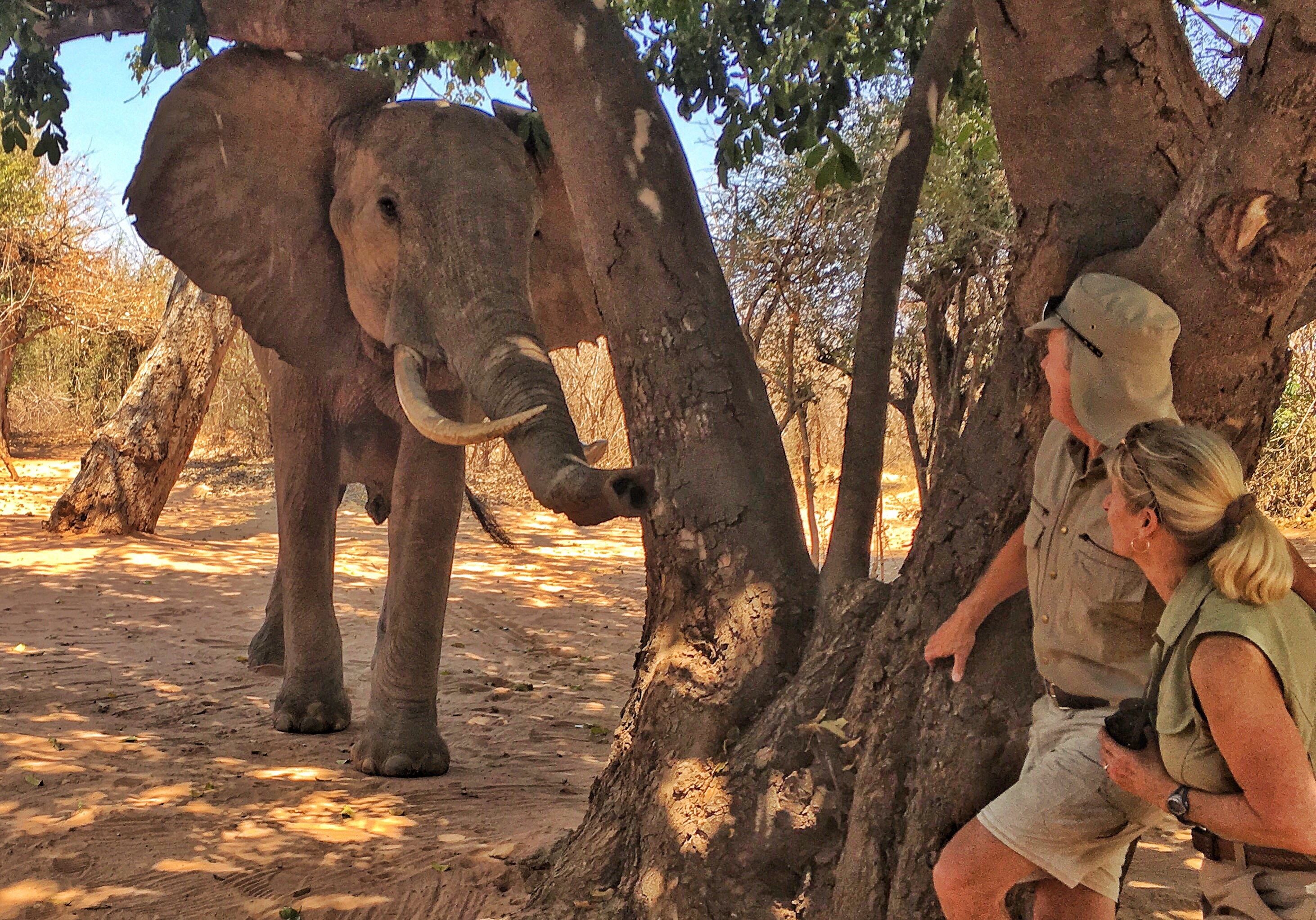 Zimbabwe | photo of Brian and Dee Keating with Elephant