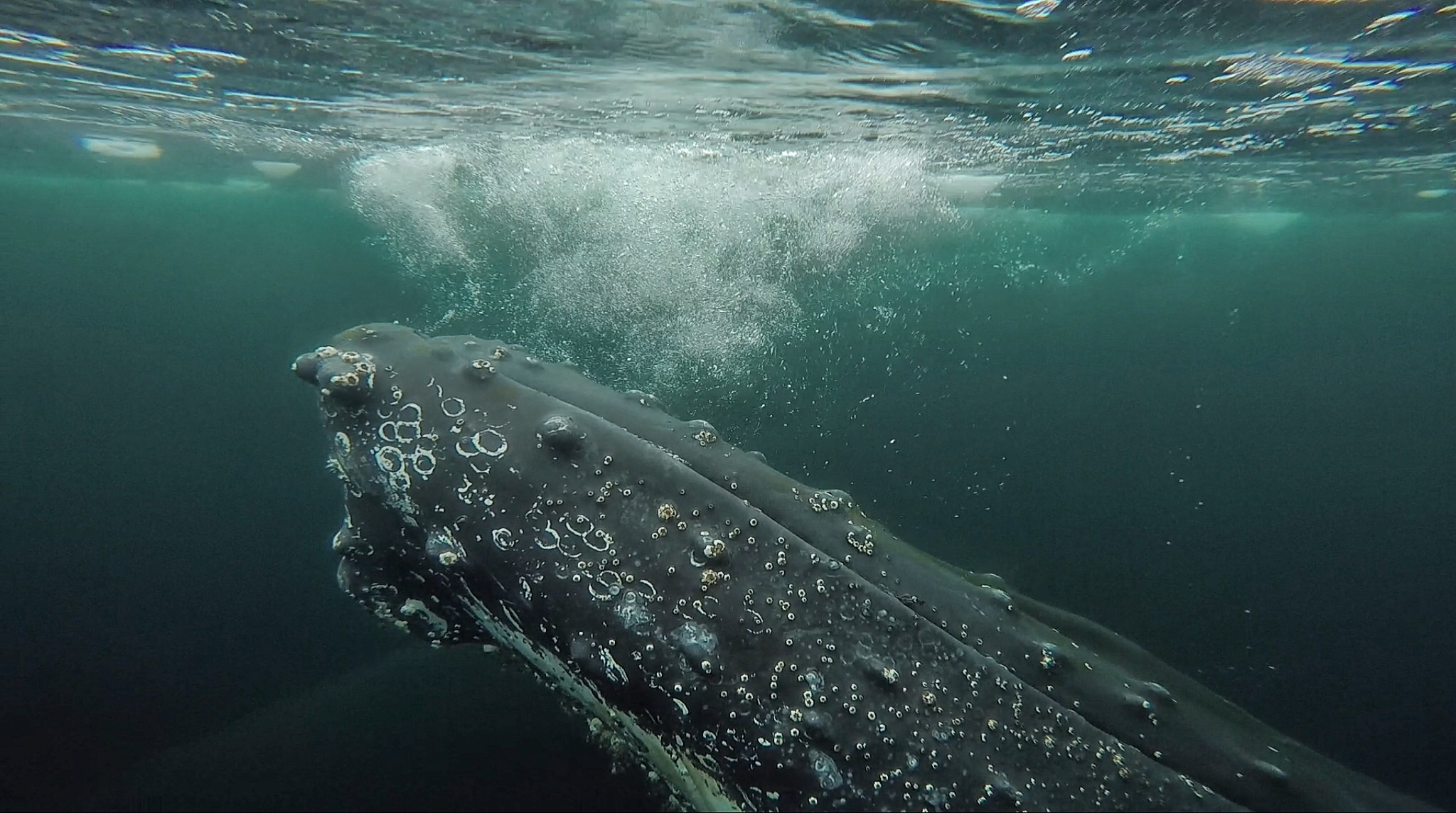 Brian Keating on National Geographic Canada | Humpback Whale