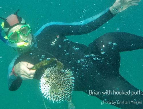 CBC Homestretch: Rescuing a Pufferfish in Mexico