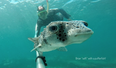 Pufferfish 'selfie' with Brian!