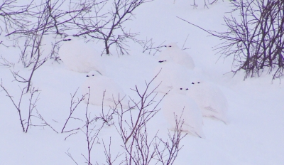 backyard birds   brian keating on cbc homestretch