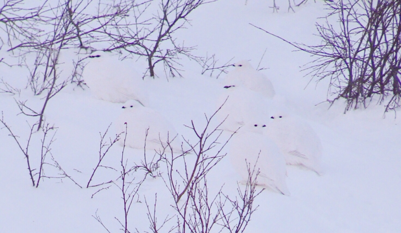 backyard birds | brian keating on cbc homestretch
