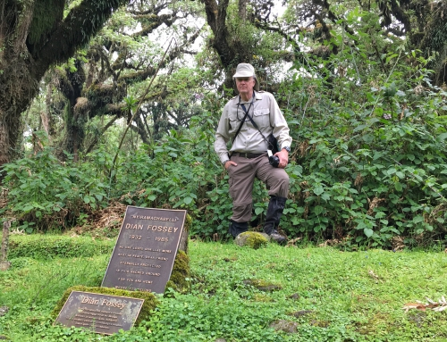 Brian Keating on CBC Homestretch: Hiking to Dian Fossey's Camp in Rwanda