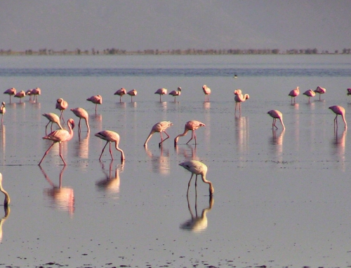 Brian Keating on CBC Homestretch: Flamingos in Tanzania