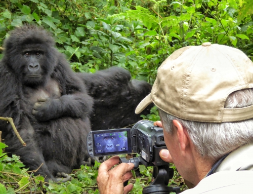 Brian Keating on CBC Homestretch: Mountain Gorillas in Rwanda