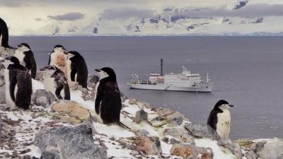 Brian Keating Antarctic Penguins 2
