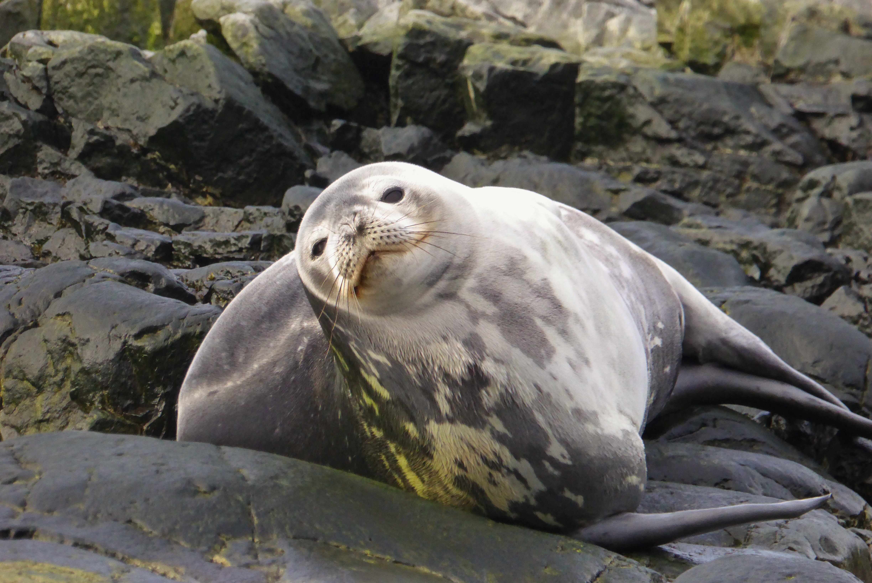 Brian Keating Antarctic Seals 1