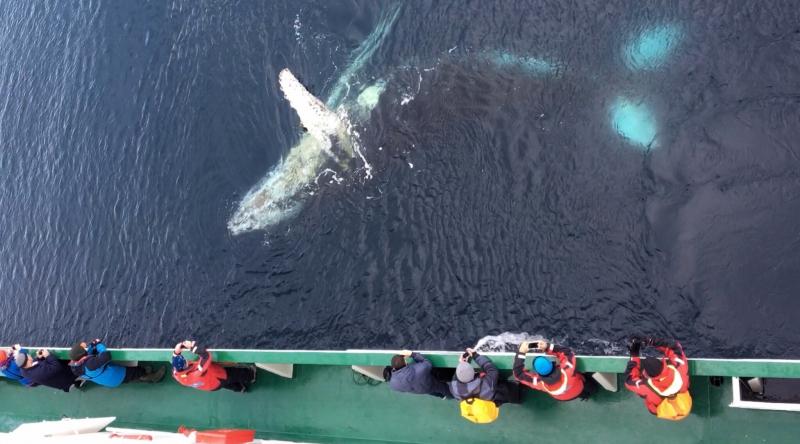 Brian Keating Antarctic Whales 1