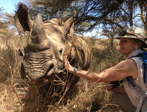 Brian Keating on CBC Homestretch: The Future of the Northern White Rhinoceros