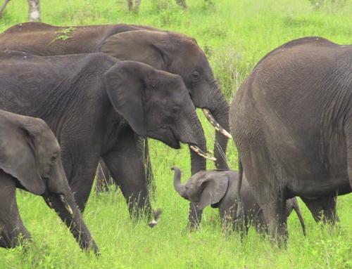Brian Keating on CBC Homestretch: Elephant Love 101
