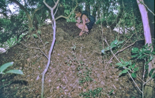 Megapos nest & Dee showing size