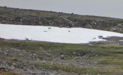 Caribou - Brian Keating