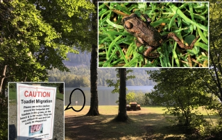 Western Boreal Toad