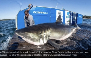 Brian Keating on CBC Homestretch: Sharks