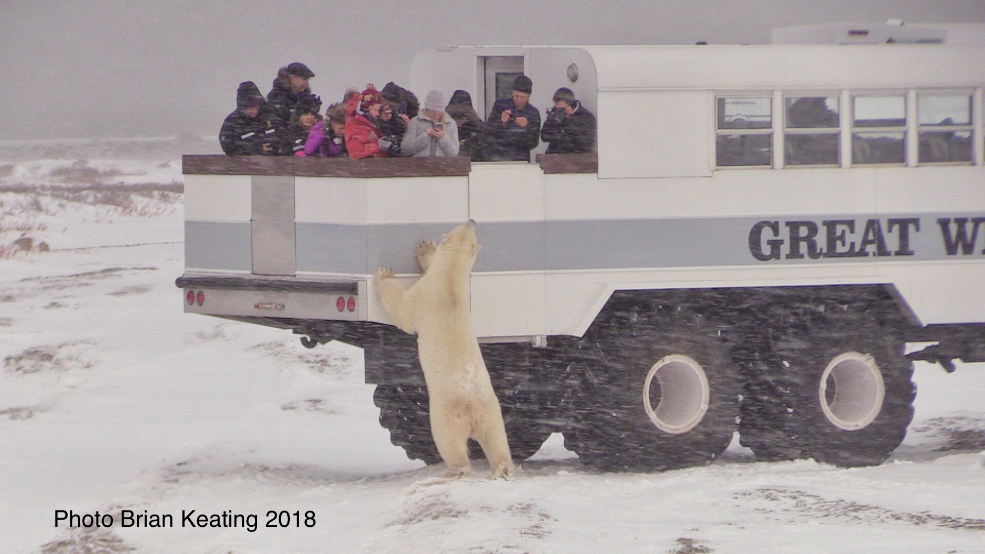 Brian Keating Polar Bear 4
