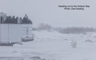 Brian Pandas & Polar Bears 1