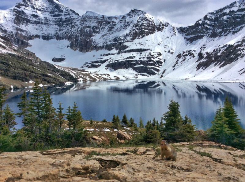 CBC Calgary: Lake O'Hara Lodge fundraiser for the Calgary Foodbank