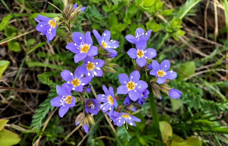 Brian Keating | Spring Flowers 1