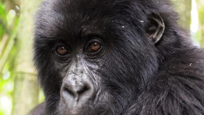Dian Fossey's camp in Rwanda
