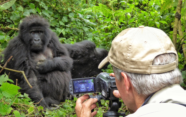 Brian Keating on CBC Homestretch: Mountain Gorillas in Rwanda