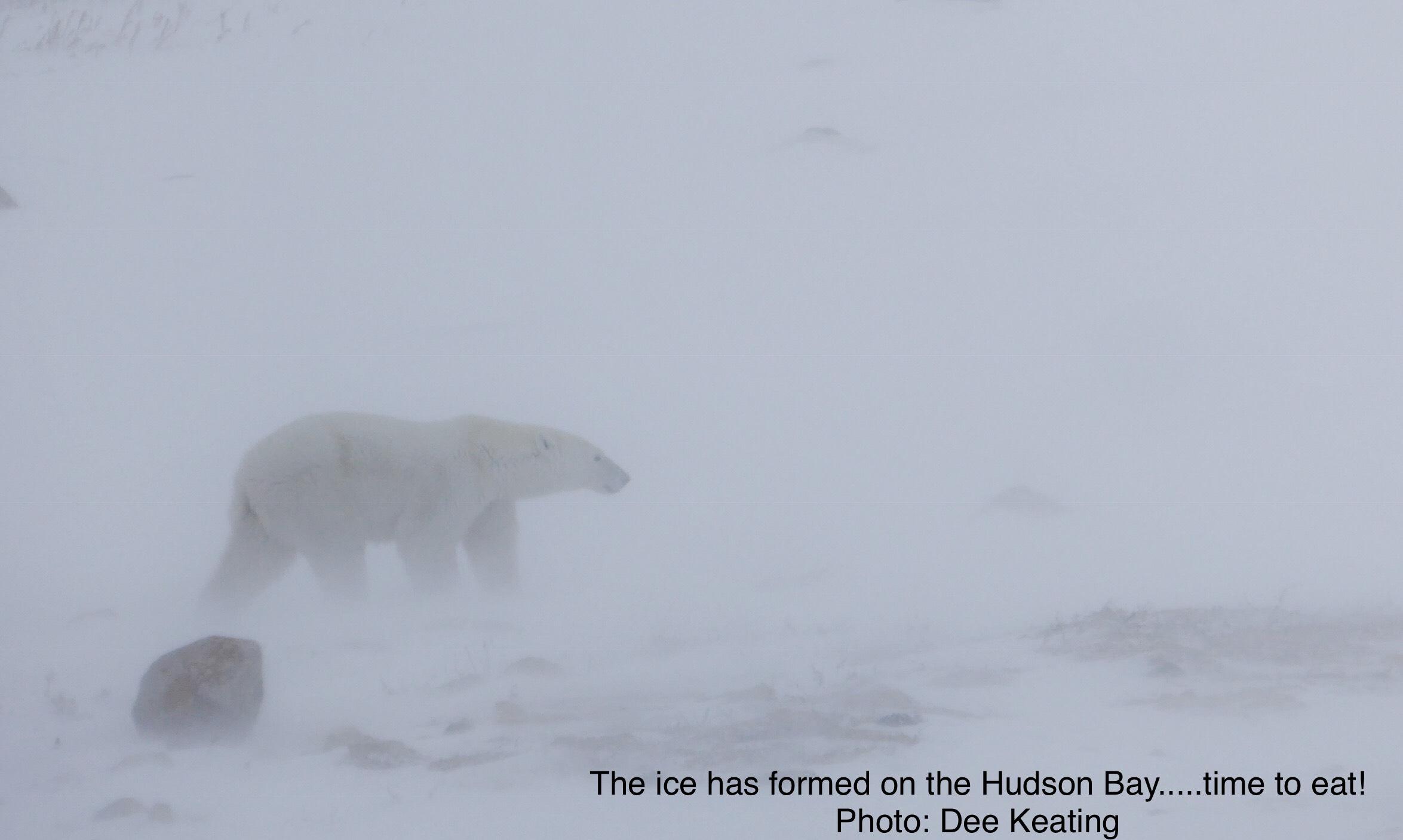 Brian Pandas & Polar Bears 2